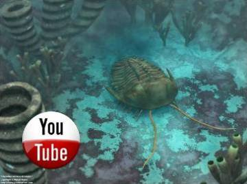 video biologia geologia
