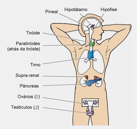Prepa 9 E.F: UNIDAD II: Glándulas endocrinas