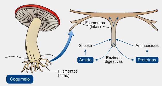 Se é possível curar um fungo de prego em um iodo da mão