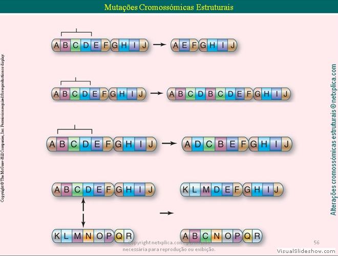 14 Mutações Cromossómicas generated by VisualSlideshow.com