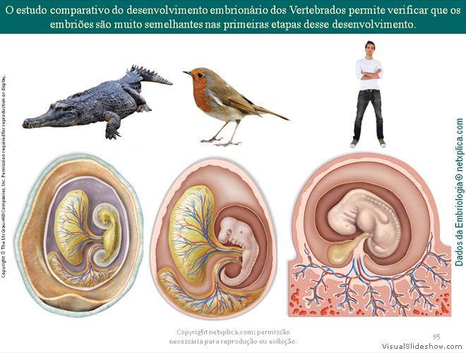 28 Argumentos do Evolucionismo generated by ...